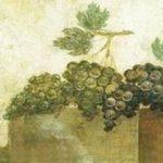 Il nobile e rinomato vino di Cales